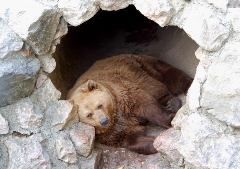 Sleeping-Bear image courtesy of bagsofafeather