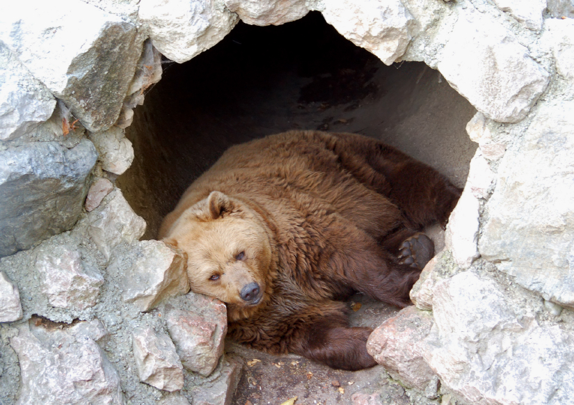 2016 Testimony #1: Hibernating toHeal